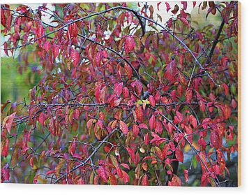 Fall Foliage Colors 05 Wood Print by Metro DC Photography