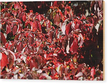 Wood Print featuring the photograph Fall Foliage Colors 08 by Metro DC Photography
