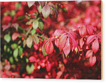 Wood Print featuring the photograph Fall Foliage Colors 10 by Metro DC Photography