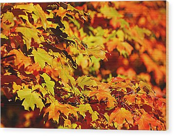Wood Print featuring the photograph Fall Foliage Colors 13 by Metro DC Photography