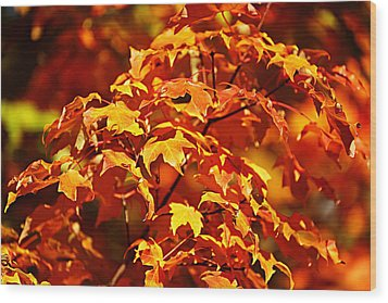 Wood Print featuring the photograph Fall Foliage Colors 14 by Metro DC Photography