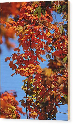 Wood Print featuring the photograph Fall Foliage Colors 15 by Metro DC Photography