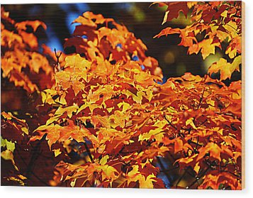 Fall Foliage Colors 16 Wood Print by Metro DC Photography