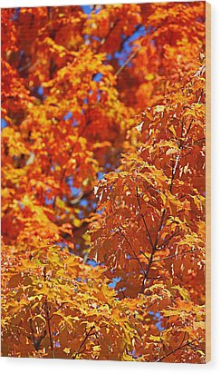 Wood Print featuring the photograph Fall Foliage Colors 17 by Metro DC Photography
