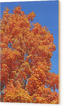 Wood Print featuring the photograph Fall Foliage Colors 18 by Metro DC Photography
