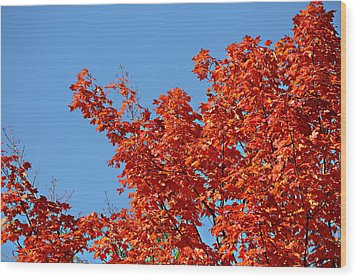 Wood Print featuring the photograph Fall Foliage Colors 20 by Metro DC Photography