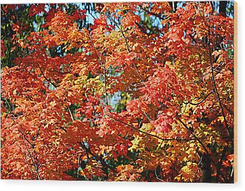 Fall Foliage Colors 22 Wood Print by Metro DC Photography