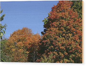 Fall Foliage In The Arboretum Wood Print by Natural Focal Point Photography