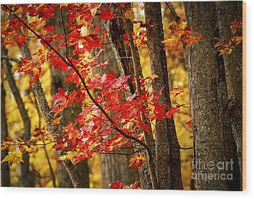 Fall Forest Detail Wood Print by Elena Elisseeva