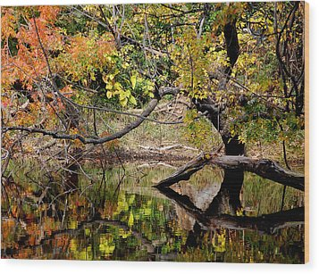 Fall From The Water Wood Print by Holly Blunkall
