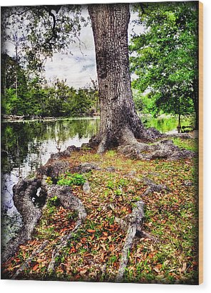 Fall In Audubon Park Wood Print by Ray Devlin