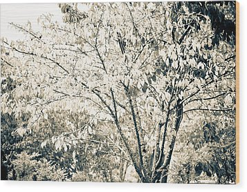 Fall In Black And White Wood Print by Ronda Broatch