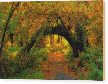 Fall In Olympia National Forest Wood Print