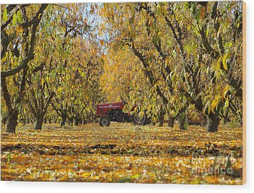 Fall In The Peach Orchard Wood Print by Jim And Emily Bush