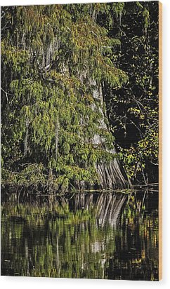 Wood Print featuring the photograph Fall In The Swamp by Andy Crawford