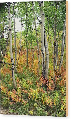 Fall In The Tetons Wood Print by Marty Koch