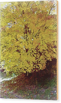 Fall In Yellow Wood Print by Larry Bishop