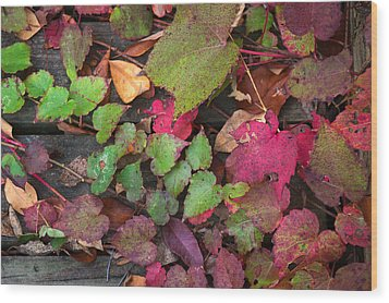 Wood Print featuring the photograph Fall Ivy by Wayne Meyer