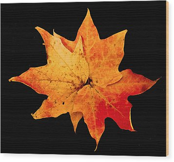 Wood Print featuring the photograph Fall Leaf Trio by Dee Dee  Whittle