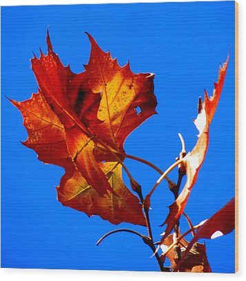 Fall Leave Wood Print by David  Norman