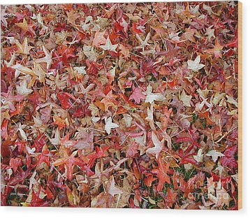 Fall Leaves Wood Print by Bev Conover