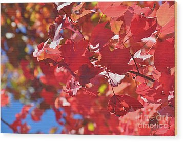 Wood Print featuring the photograph Fall Leaves In Oregon by Mindy Bench