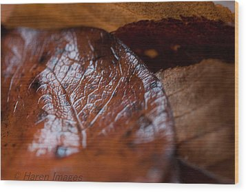 Wood Print featuring the photograph Fall Leaves by Haren Images- Kriss Haren