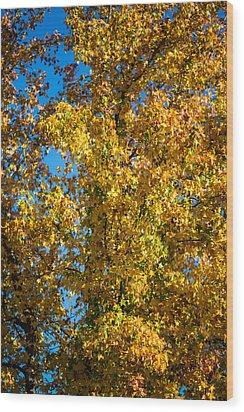 Fall Leaves Wood Print by Mike Lee