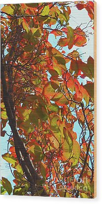 Fall Leaves Wood Print by Scott Cameron