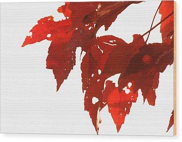 Fall Leaves Wood Print by Susie DeZarn