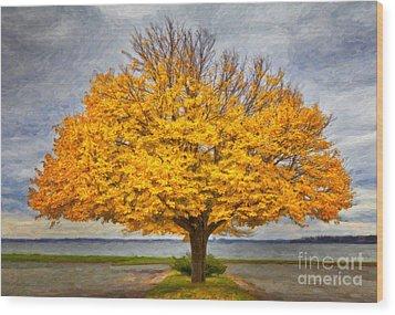 Fall Linden Wood Print
