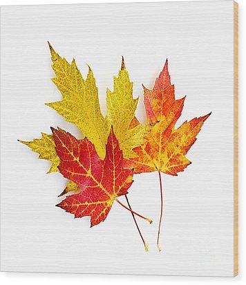Fall Maple Leaves On White Wood Print by Elena Elisseeva
