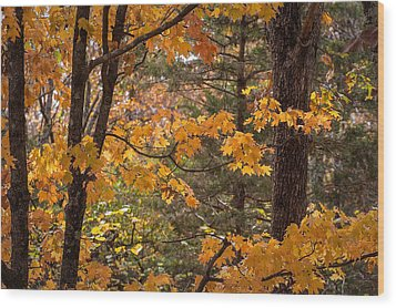 Fall Maples - 01 Wood Print by Wayne Meyer
