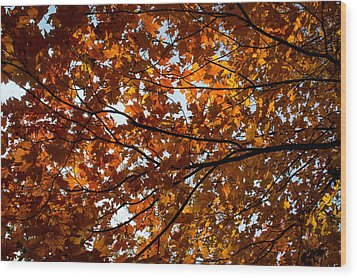 Wood Print featuring the photograph Fall Maples - 02 by Wayne Meyer