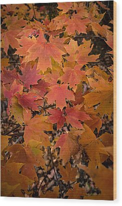 Wood Print featuring the photograph Fall Maples - 03 by Wayne Meyer
