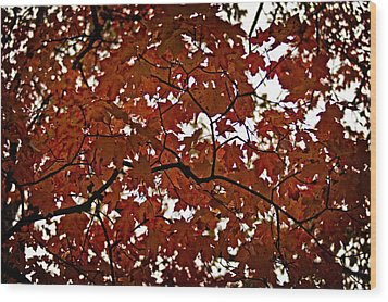 Wood Print featuring the photograph Fall Maples - 04 by Wayne Meyer