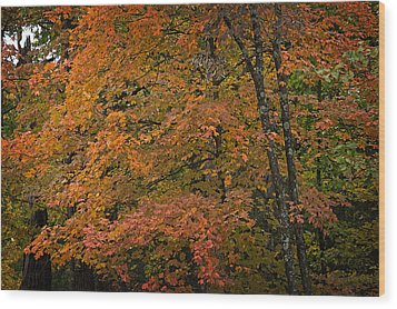 Wood Print featuring the photograph Fall Maples - 05 by Wayne Meyer