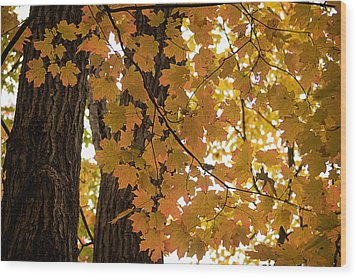 Wood Print featuring the photograph Fall Maples - 06 by Wayne Meyer