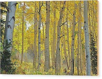 Fall Morning Shine Wood Print
