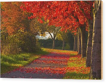 Fall Pheasant Wood Print