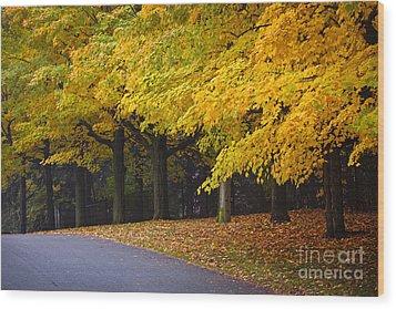 Fall Road And Trees Wood Print by Elena Elisseeva