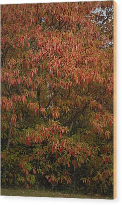 Wood Print featuring the photograph Fall Sassafras Trees by Wayne Meyer