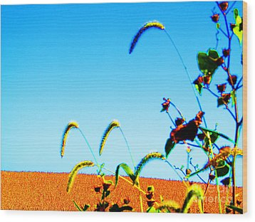 Fall Skies On Soybeans Farm Wood Print by Tina M Wenger