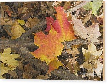 Fall Wood Print by Steven Ralser