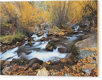 Fall Stream Wood Print by Darryl Wilkinson