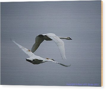 Wood Print featuring the photograph Fall Swans by Al Fritz