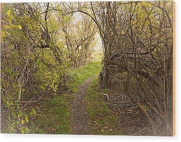Fall Trail Wood Print by Frank Winters