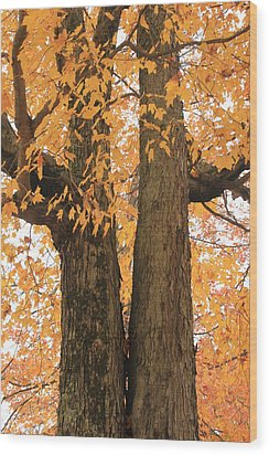 Wood Print featuring the photograph Fall Trees by Amazing Jules
