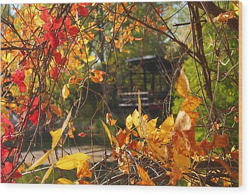 Wood Print featuring the photograph Fall View by Alicia Knust