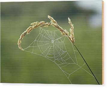 Fall Web Wood Print by Annie Pflueger